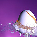 Egg Hit By A Bullet by Ted Kinsman