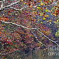 Fall Along West Fork River by Thomas R Fletcher