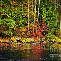 Fall Forest And River Landscape by Elena Elisseeva