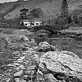 Fern Bridge by Gary Finnigan