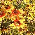 Garden  Flowers  by Thelma Harcum
