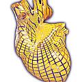 Human Heart, Artwork by Laguna Design