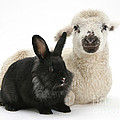 Lamb And Rabbit by Mark Taylor
