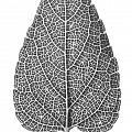Leaf by Jason Smith