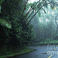 Misty Rainforest El Yunque by Thomas R Fletcher