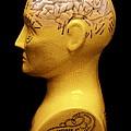 Phrenology Bust by Mark Sykes