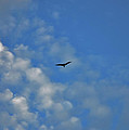 4- Seagull by Joseph Keane