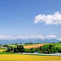 Summer In Hokkaido by Frank Chen