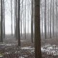 Trees With Fog by Mats Silvan
