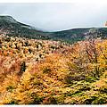 White Mountain's Gold by Richard Bean
