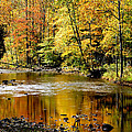 Williams River Autumn by Thomas R Fletcher