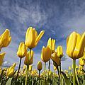 Woodburn, Oregon, United States Of by Craig Tuttle