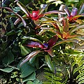 Bromeliad Plant by Dr Keith Wheeler