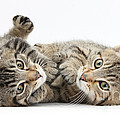Kitten Companions by Mark Taylor