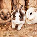 5 Little Rabbits by Silvio Schoisswohl