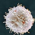 Stem Cell, Sem by
