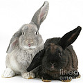 Two Rabbits by Mark Taylor