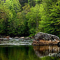 Williams River Scenic Backway by Thomas R Fletcher