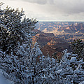 Winter Time On The South Rim by Michael S. Lewis