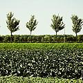 50 Shades Of Green by Yvon van der Wijk