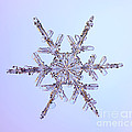 Snowflake by Ted Kinsman