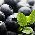 Blueberries by Kati Finell