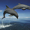 Bottlenose Dolphin Tursiops Truncatus by Konrad Wothe