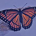 Butterfly Design Collection by Debra     Vatalaro