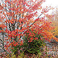 Fall Color Along The Highland Scenic Highway by Thomas R Fletcher