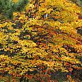 Fall by George Ramondo