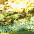 Flower Garden In Sunshine by Elena Elisseeva