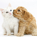 Kitten And Puppy by Mark Taylor