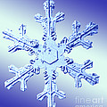 Snow Crystal by Science Source