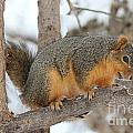 Squirrel by Lori Tordsen
