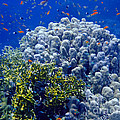 Underwater Landscape by MotHaiBaPhoto Prints