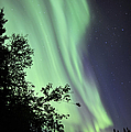 Aurora Borealis Above The Trees by Jiri Hermann