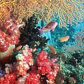 Coral Reef by Georgette Douwma
