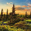 Dolly Sods Wilderness by Mary Almond
