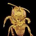 Honey Bee, Sem by Susumu Nishinaga