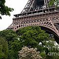 Paris by Carol Ailles