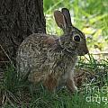 Rabbit by Lori Tordsen