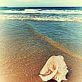 Seashell by MotHaiBaPhoto Prints