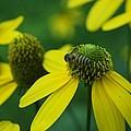 Flower by Gornganogphatchara Kalapun