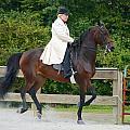 Class 31  Open Saddle Seat Pleasure  by Mark Dodd