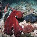 Day Octopus by Georgette Douwma