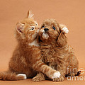 Puppy And Kitten by Mark Taylor