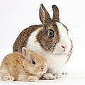 Rabbit And Baby Bunny by Mark Taylor