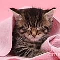 Tabby Kitten by Mark Taylor