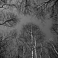 Trees In Epping Forest by David Pyatt