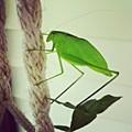 Instagram Photo by Dana Coplin